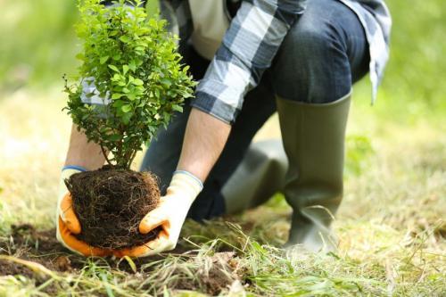 Когда осенью можно сажать деревья. Плюсы и минусы осенней посадки