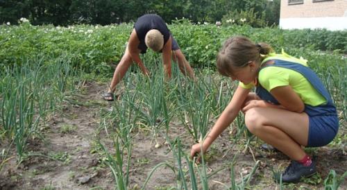 Природное земледелие на садовом участке. Органическое земледелие на даче