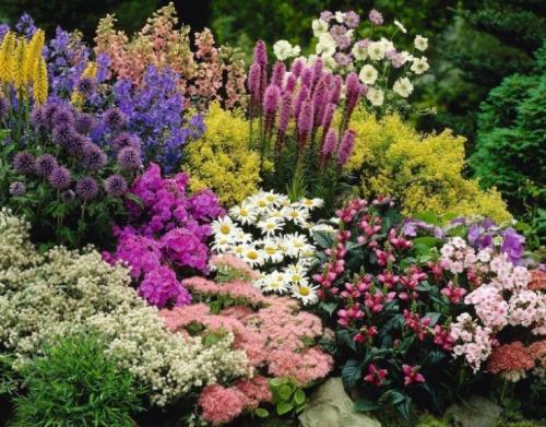 Самые неприхотливые цветы для дачи. Обзор многолетних видов