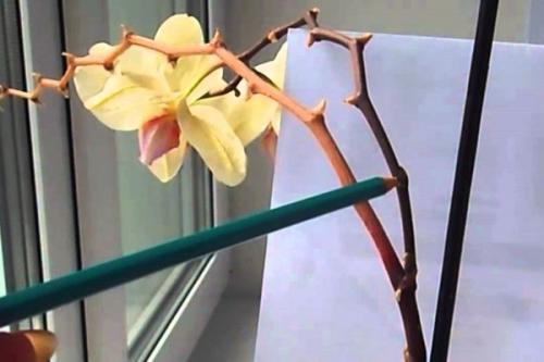 Цитокининовая паста применение для комнатных растений кроме орхидей. Цитокининовая паста: как использовать для комнатных растений