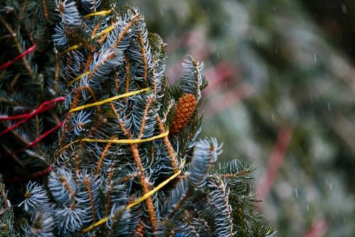 Что делать если елка осыпается. Важные советы, чтобы новогодняя ель не засыпала весь дом иголками