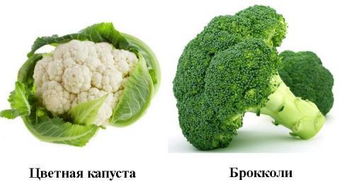 В чем разница между цветной капустой и брокколи? Знакомимся с родственниками огородной капусты