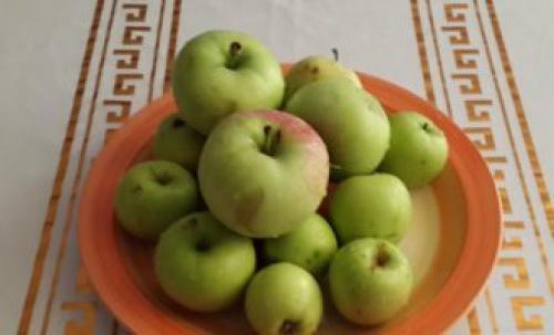 Как сушить яблоки на зиму в духовке газовой плиты. Как высушить яблоки в духовке