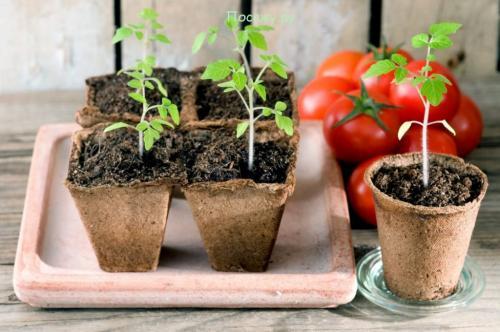 Что и когда сеять в огороде. Как сажать рассаду в 2020 году