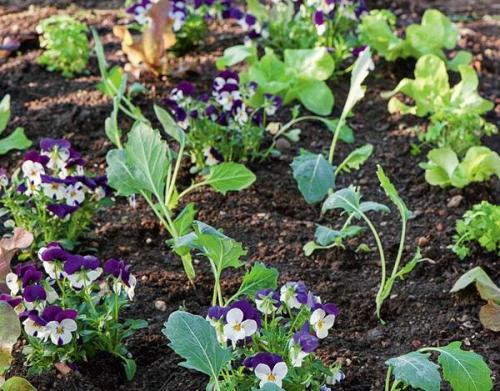 Когда сажать овощи на огороде. Умный огород: севооборот и подбор «соседей» для ранних овощных культур