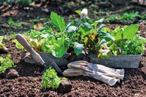 Что за чем сажать на огороде. Умный огород: севооборот и подбор «соседей» для ранних овощных культур