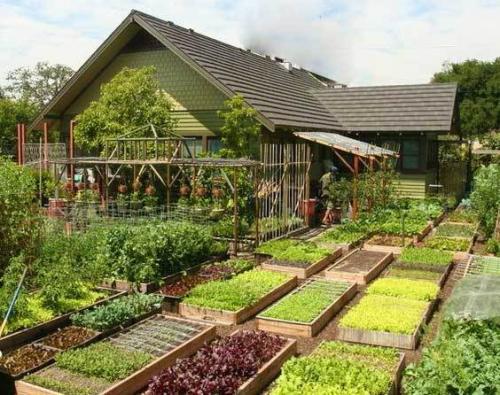 Что посадить в огороде новичку. Планировка Огорода под Посадку Овощей — Секреты Успешного Урожая
