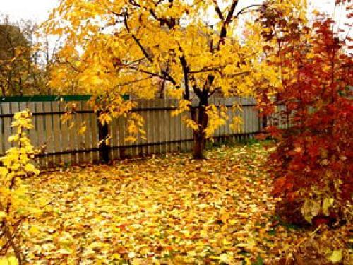 Перечисли чем занимаются люди осенью в доме саду и огороде. Что делают люди осенью.