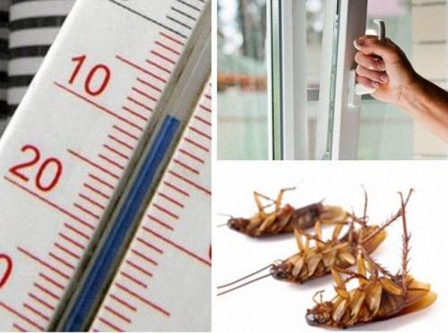 Как вывести тараканов. Как избавиться от тараканов в домашних условиях