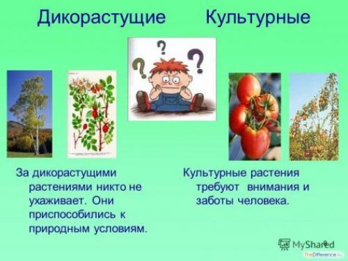 Сорта культурных растений? откуда они взялись. Откуда взялись культурные растения