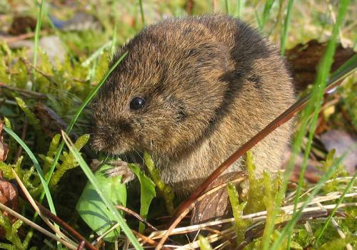 Мыши в грядках. Разновидности огородно-дачных вредителей
