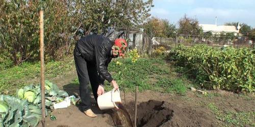 Что посадить под зиму. Что сажают осенью в саду и огороде