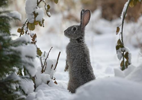 Как защитить саженцы от зайцев и мышей. Как защитить сад зимой от мышей и зайцев