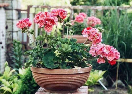 Насекомоядные растения в домашних условиях уход. Особенности выращивания хищников в комнатах 07