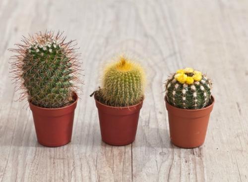 Насекомоядные растения в домашних условиях уход. Особенности выращивания хищников в комнатах 04
