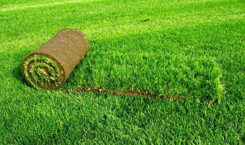 Как правильно уложить газонную траву. Рулонный газон: как укладывать самостоятельно