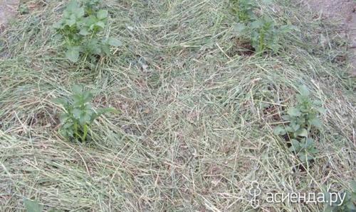 Как использовать солому в саду и огороде. Солома в садово-огородных работах