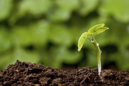 От чего зависит плодородие почвы