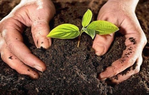 Что такое плодородие почвы от чего оно зависит. Как определить плодородие на участке и от чего оно зависит