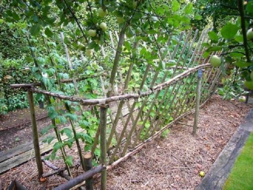 Как защитить молодые деревья зимой. Способы защиты дерева от морозов