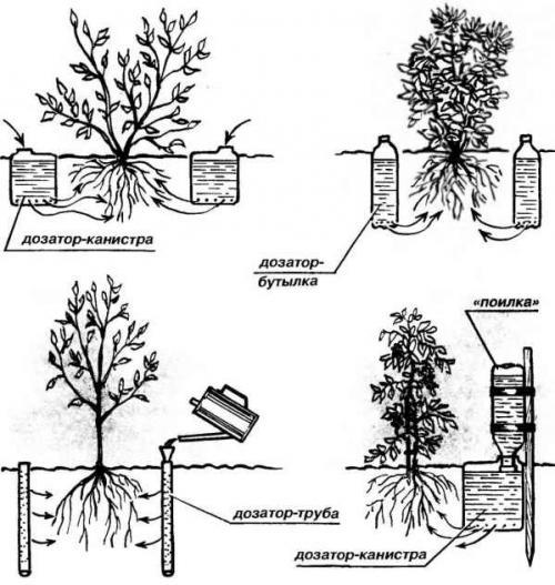 Надо ли поливать саженцы посаженные осенью — Портал о стройке