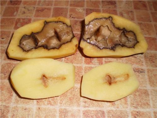 При каком градусе картошка может замерзнуть