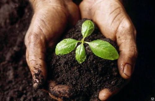 Какие растения любят свежий навоз. Каким растениям нужен навоз, а, какие скажут спасибо за перегной