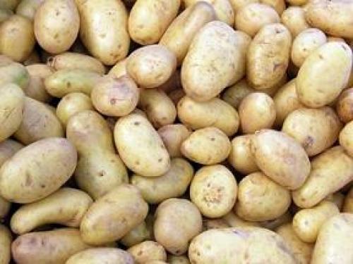 Можно ли мыть картошку перед хранением на зиму