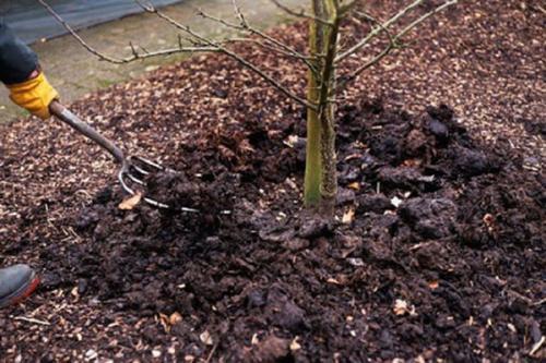 Нужно ли заливать деревья на зиму. 1 Зачем нужен осенний полив сада?