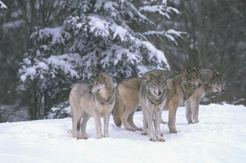 Приметы народов своего края за поведением животных. Народные приметы про диких животных