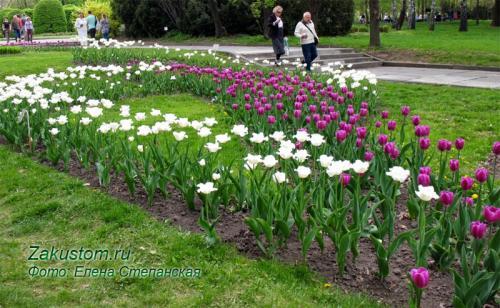 Что посадить на клумбе с тюльпанами. Варианты весенних клумб