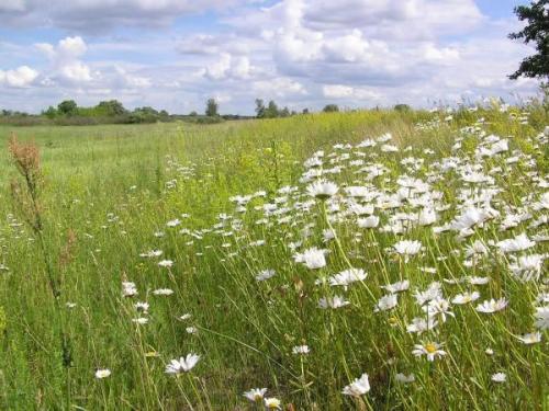 Мокрица растет на,, какой почве по кислотности. Как определить кислотность почвы по растущим на ней сорнякам?