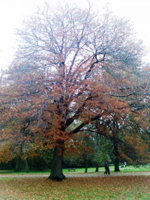 Деревья до 5 метров высотой. Тенистые деревья