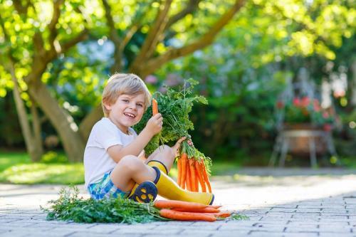 Почему морковь горчит и можно ли ее есть. Почему морковь вырастает горькой 03