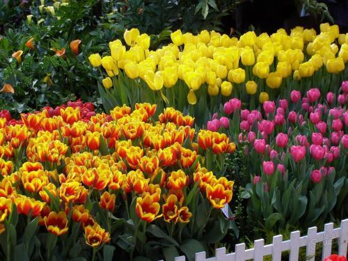 Как посадить тюльпаны в специальной корзинке. Как правильно использовать корзины для посадки луковичных? 04