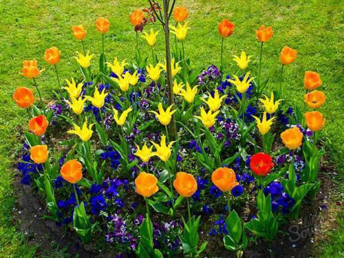 Как посадить тюльпаны в специальной корзинке. Как правильно использовать корзины для посадки луковичных? 10