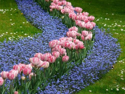 Как посадить тюльпаны в специальной корзинке. Как правильно использовать корзины для посадки луковичных? 06
