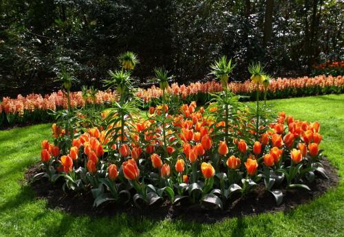 Как посадить тюльпаны в специальной корзинке. Как правильно использовать корзины для посадки луковичных? 09