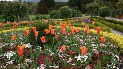 Как посадить тюльпаны в специальной корзинке. Как правильно использовать корзины для посадки луковичных? 08