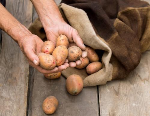 Когда мерзнет картошка