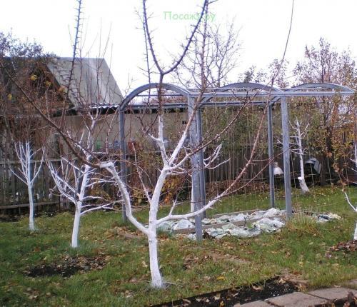 Заливка деревьев на зиму. Осеняя подготовка плодовых деревьев к зиме