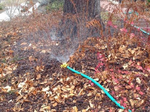 Нужно ли поливать фруктовые деревья на зиму. Нужно ли поливать плодовые деревья осенью