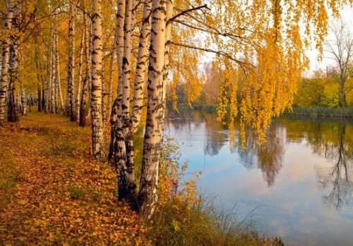 Когда на деревьях появляются первые желтые листья