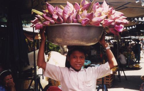 Цветок лотос где растет. Что представляет собой райский цветок 20
