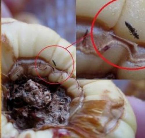 Как хранить георгины и гладиолусы зимой. Как сохранить клубни георгин и луковицы гладиолусов зимой дома?