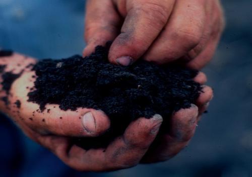 Нужно ли поливать плодовые деревья на зиму. Потребности в поливе и его объёмы