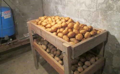 При какой температуре замерзает картофель в погребе. Способы складирования картофеля при хранении