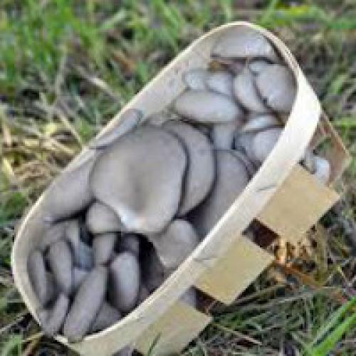 Сколько можно хранить грибы в холодильнике (свежие, жареные, вареные, соленые, консервированные)