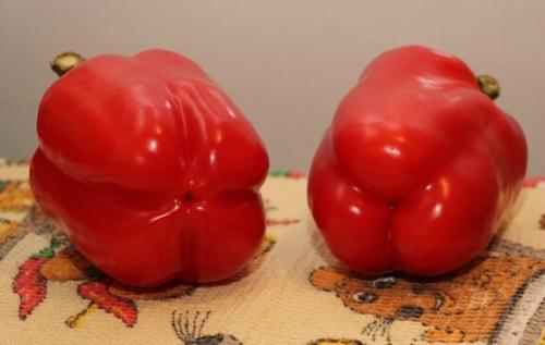 Перец мужской и женский на семена. Что вырастет из семян магазинного перца?