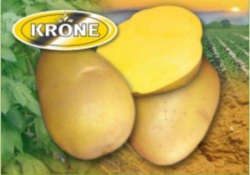 Рассыпчатые сорта картофеля для Средней полосы. Список лучших сортов картофеля по алфавиту 06